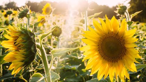 Sunshine-Werbetarif